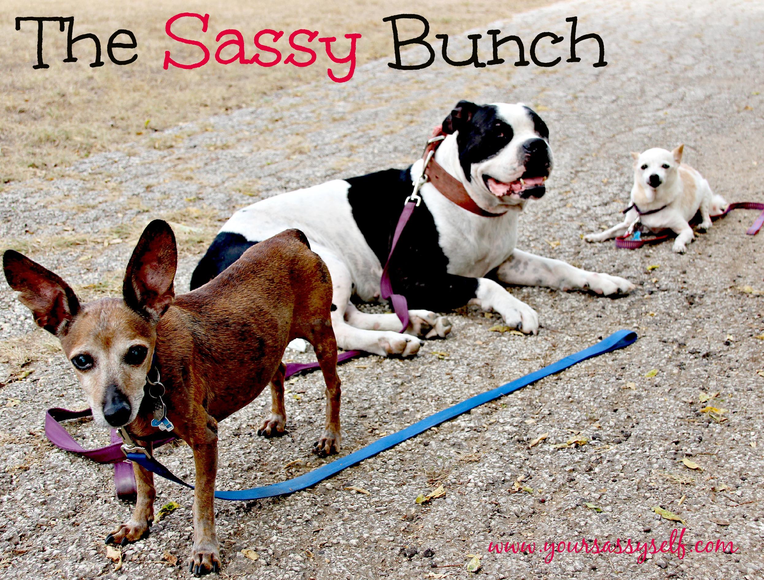 TheSassyBunch-yoursassyself.com