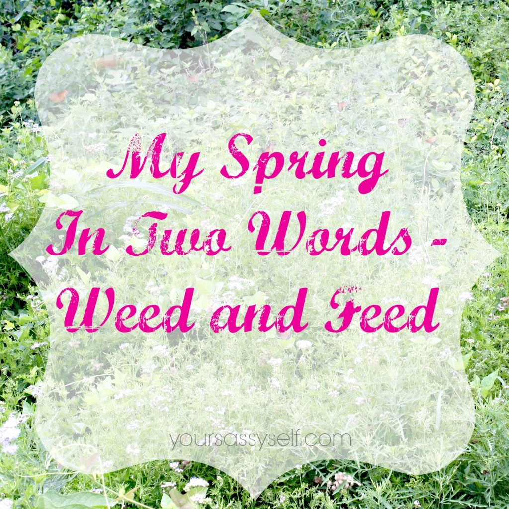 Spring in Two Words-Weed n Feed - yoursassyself.com