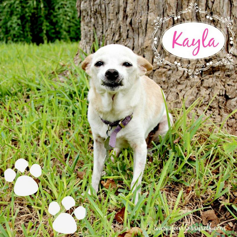 Kayla RIP 2000-2015 - yoursassyself.com