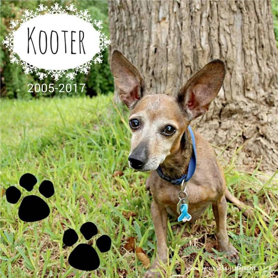 Kooter RIP 2005-2017 - yoursassyself.com