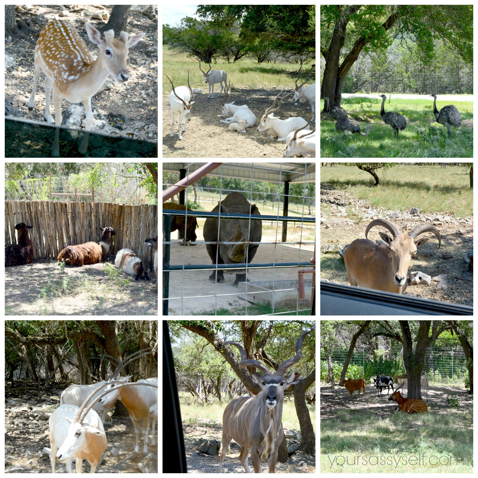 Natural Bridge Wildlife Ranch, Savings and Zoo Park Description for Natural Bridge Wildlife Ranch is a acre zoo located in New Braunfels, Texas. It is home to over animals like lemurs, kangaroos, camels, zebras, gazelles and giraffe.