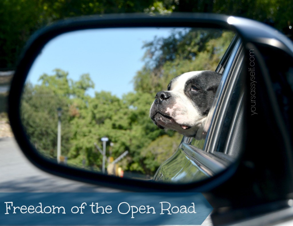 Dog Enjoying Car Ride - yoursassyself.com