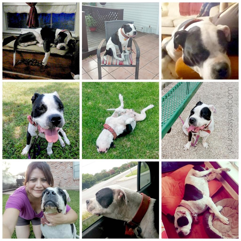 9 pics of Black and White Dog- yoursassyself.com