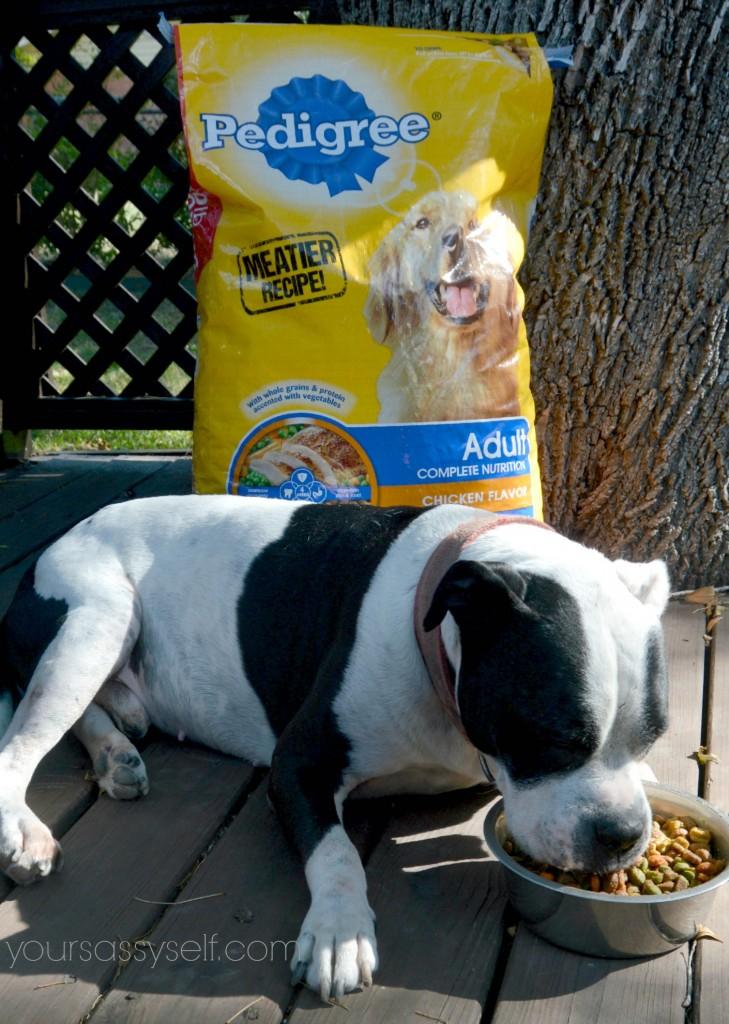 Dog eating PEDIGREE® - yoursassyself.com