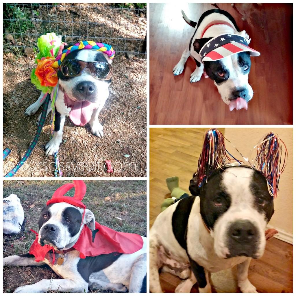 Dog with Various Getups - yoursassyself.com