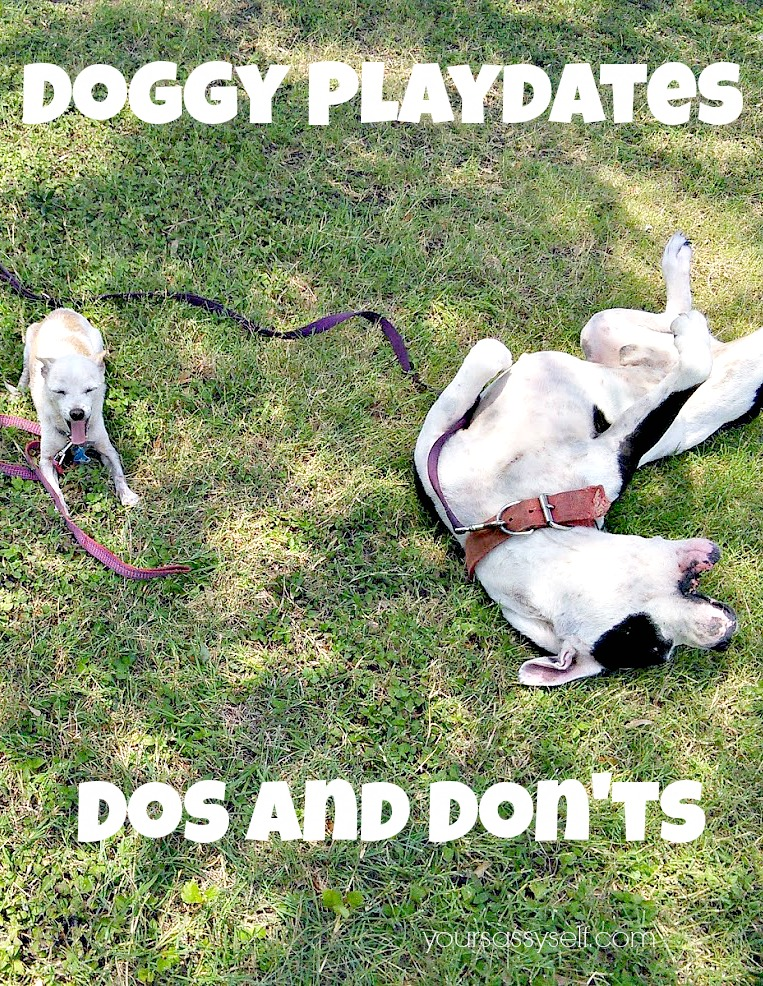 Doggy Playdates Dos and Don'ts - yoursassyself.com