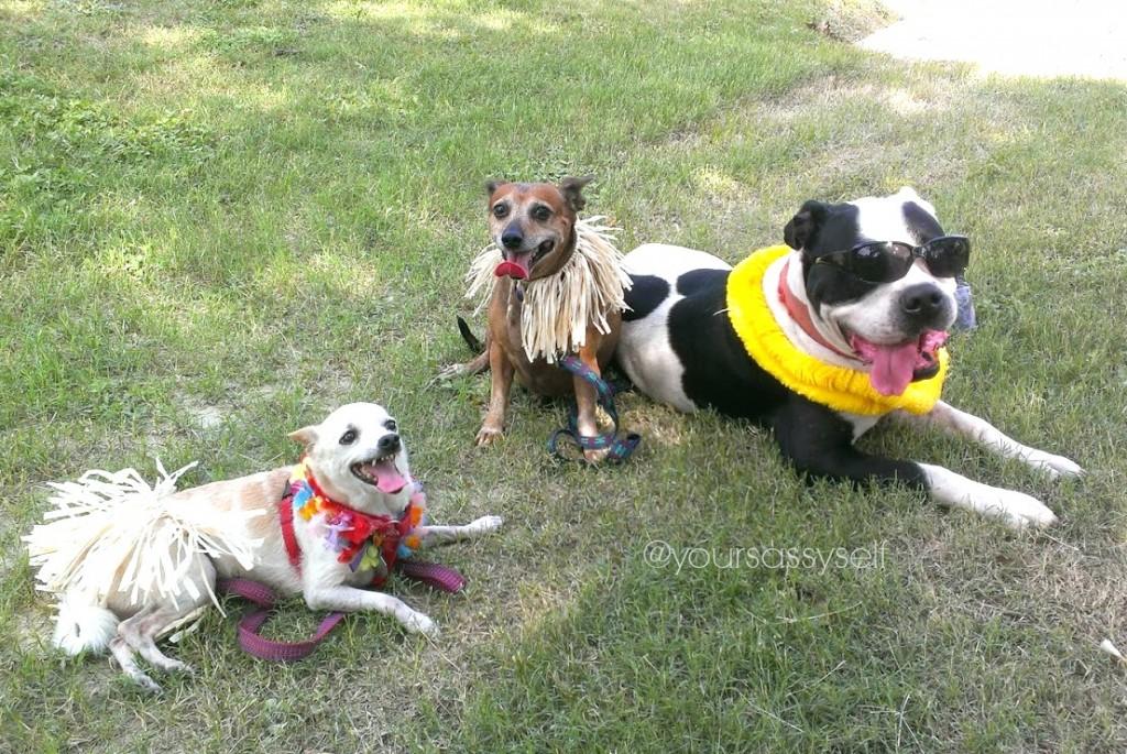 Dogs dressed for a luau - yoursassyself.com