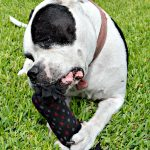 DIY Crinkle Dog Toy + Free Purina Beneful Sample