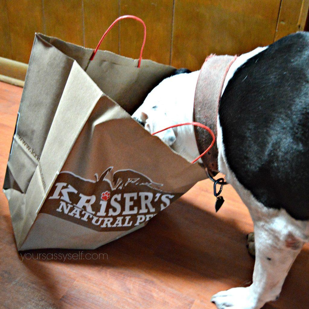 dog-looking-through-krisers-natural-pet-bag-yoursassyself-com