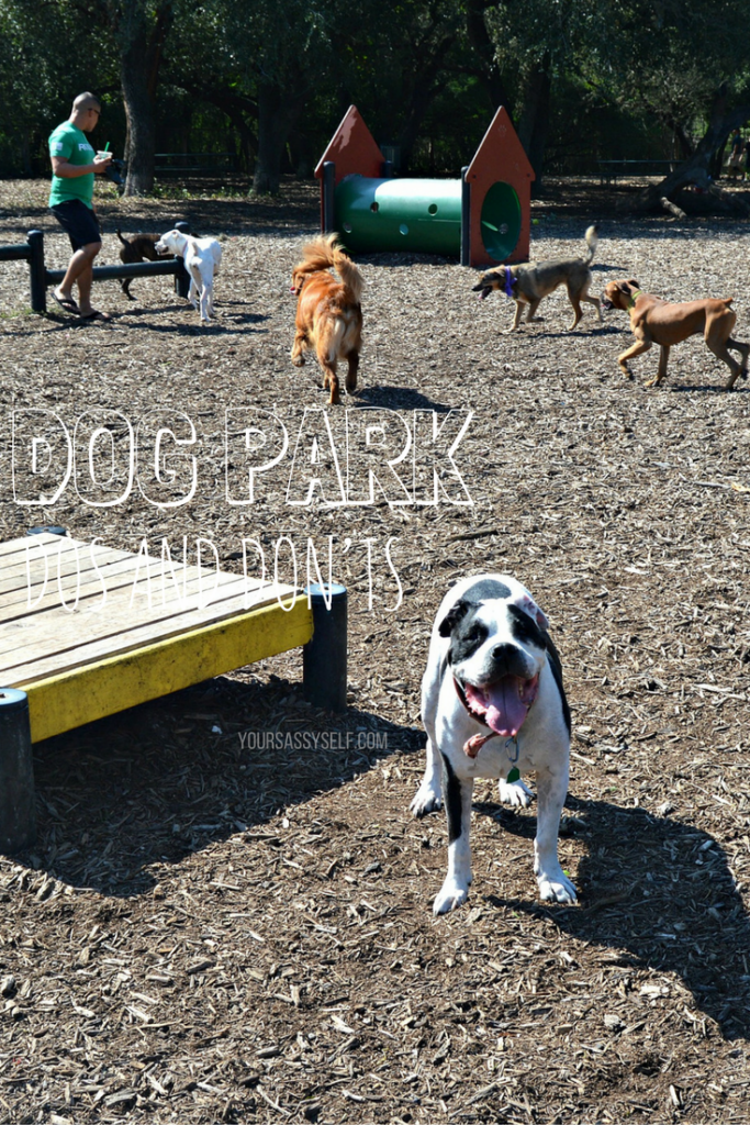 dog-park-dos-and-donts-yoursassyself-com