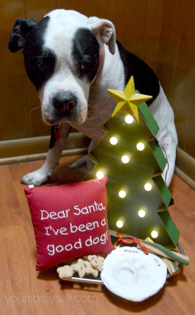 dog-celebrating-at-diy-ornament-party-yoursassyself-com