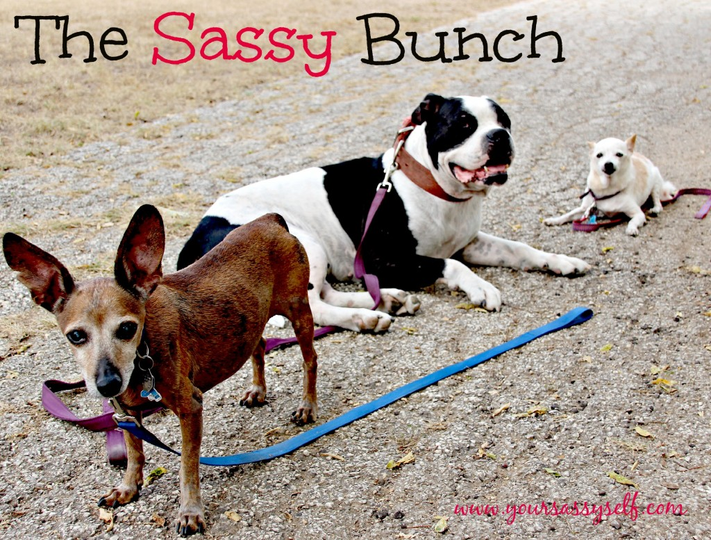The Sassy Bunch Pedigree-yoursassyself.com