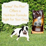 Purina® Pro Plan® Offers a Nutrition Formula Right For Your Dog