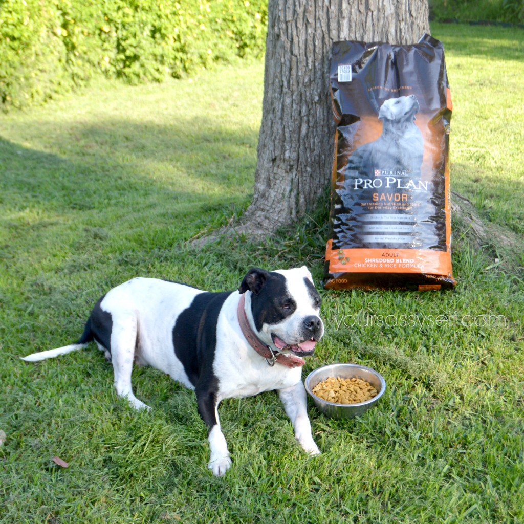 Savor Purina Pro Plan - yoursassyself.com