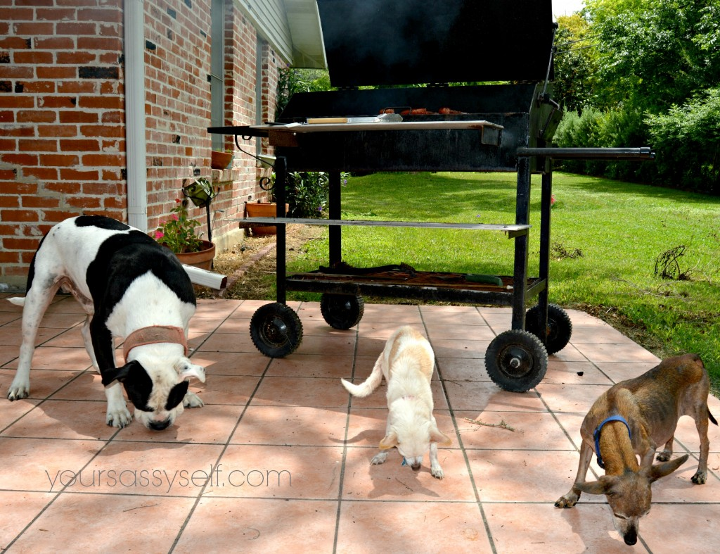3 Dogs Enjoying Nudges® Grillers & Sizzlers by BBQ pit - yoursassyself.com