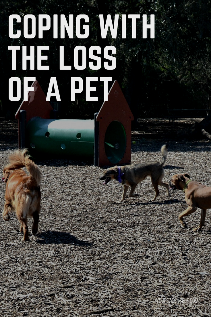 Coping With The Loss of a Pet - yoursassyself.com