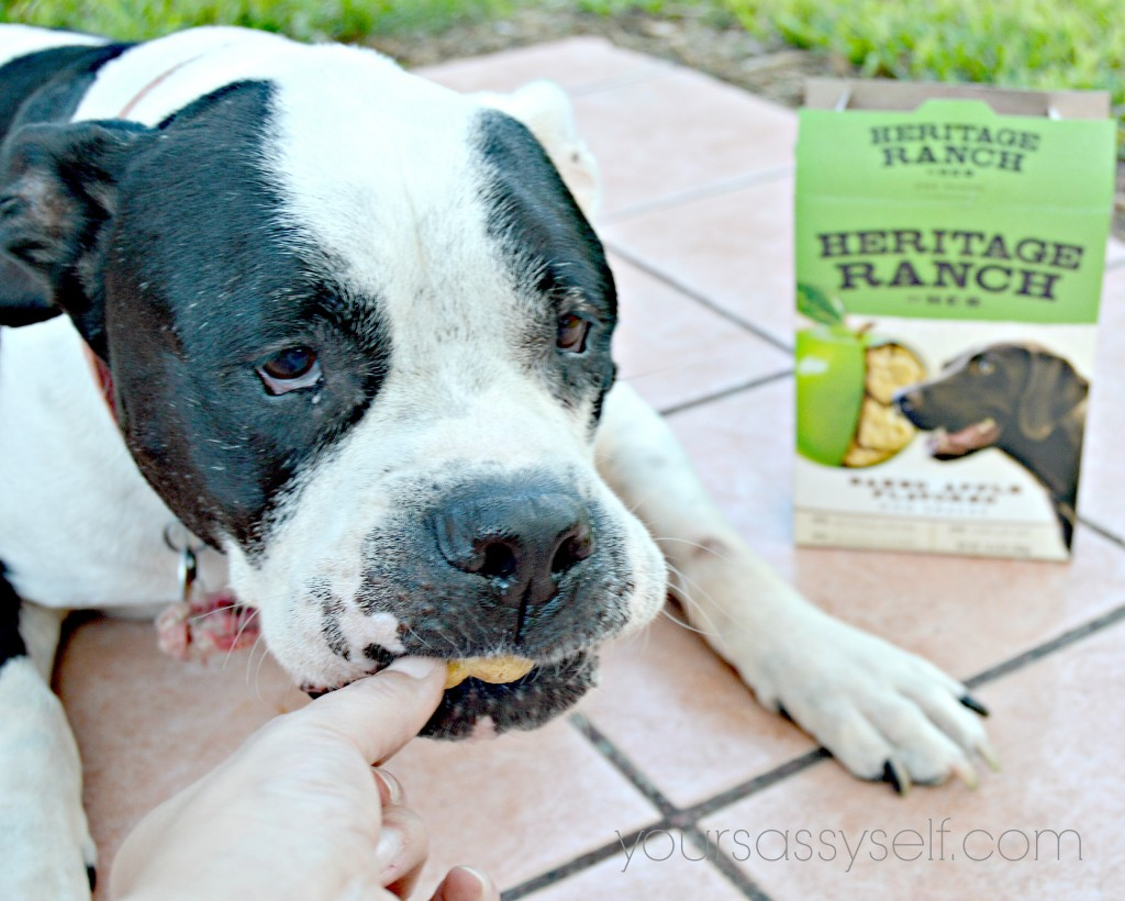 Dog Eating Heritage Ranch - Baked Apple Flavored snack - yoursassyself.com