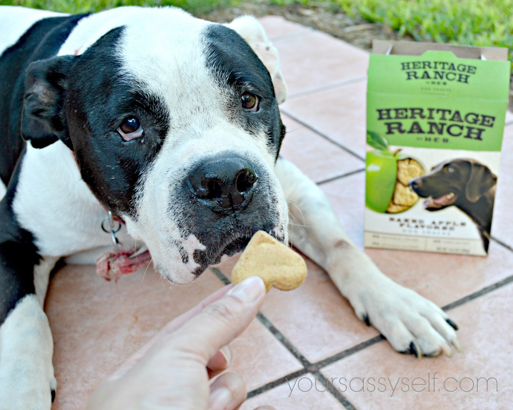 Dog Smelling Heritage Ranch - Baked Apple Flavored snack - yoursassyself.com