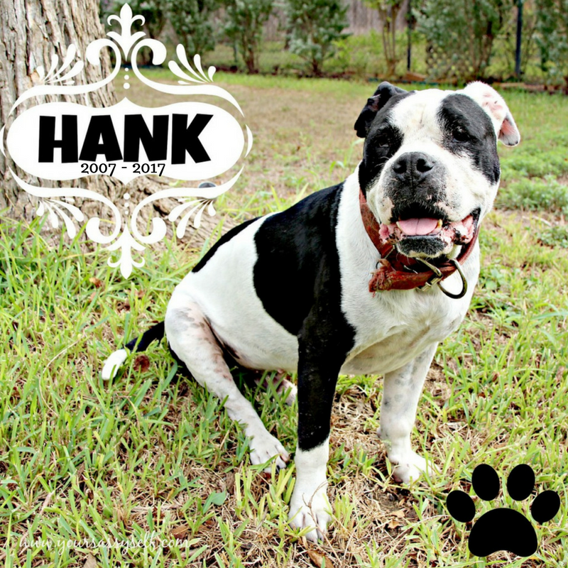 Hank RIP 2007 - 2017 - yoursassyself.com