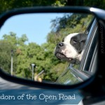 Freedom of the Open Road