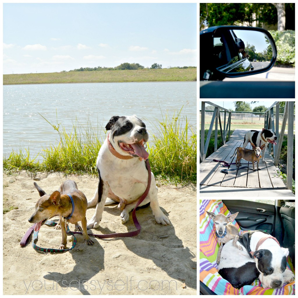 Doggie Travel Spots - yoursassyself.com