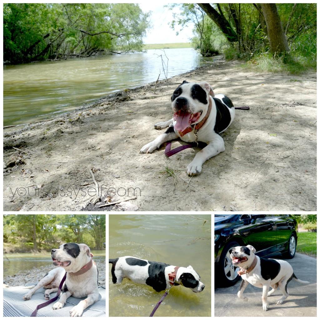 Dog enjoying the outdoors - yoursassyself.com
