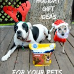Holiday Gift Ideas for Your Pets