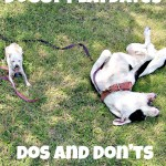 Doggy Playdates Dos and Don'ts
