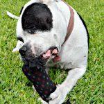 DIY Crinkle Dog Toy + Free Purina Beneful Sample