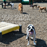 Dog Park Dos and Don'ts