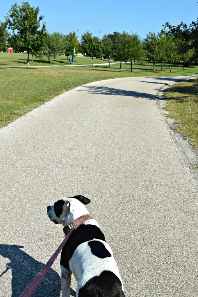 dog-on-walking-path-yoursassyself-com