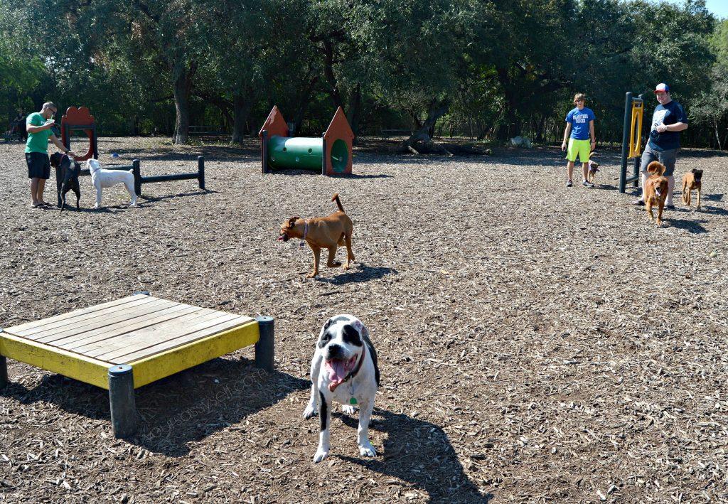dogs-enjoying-dog-park-yoursassyself-com