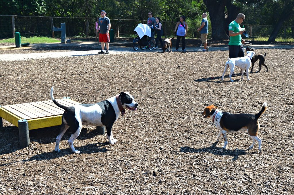 dogs-and-their-owners-at-dog-park-yoursassyself-com