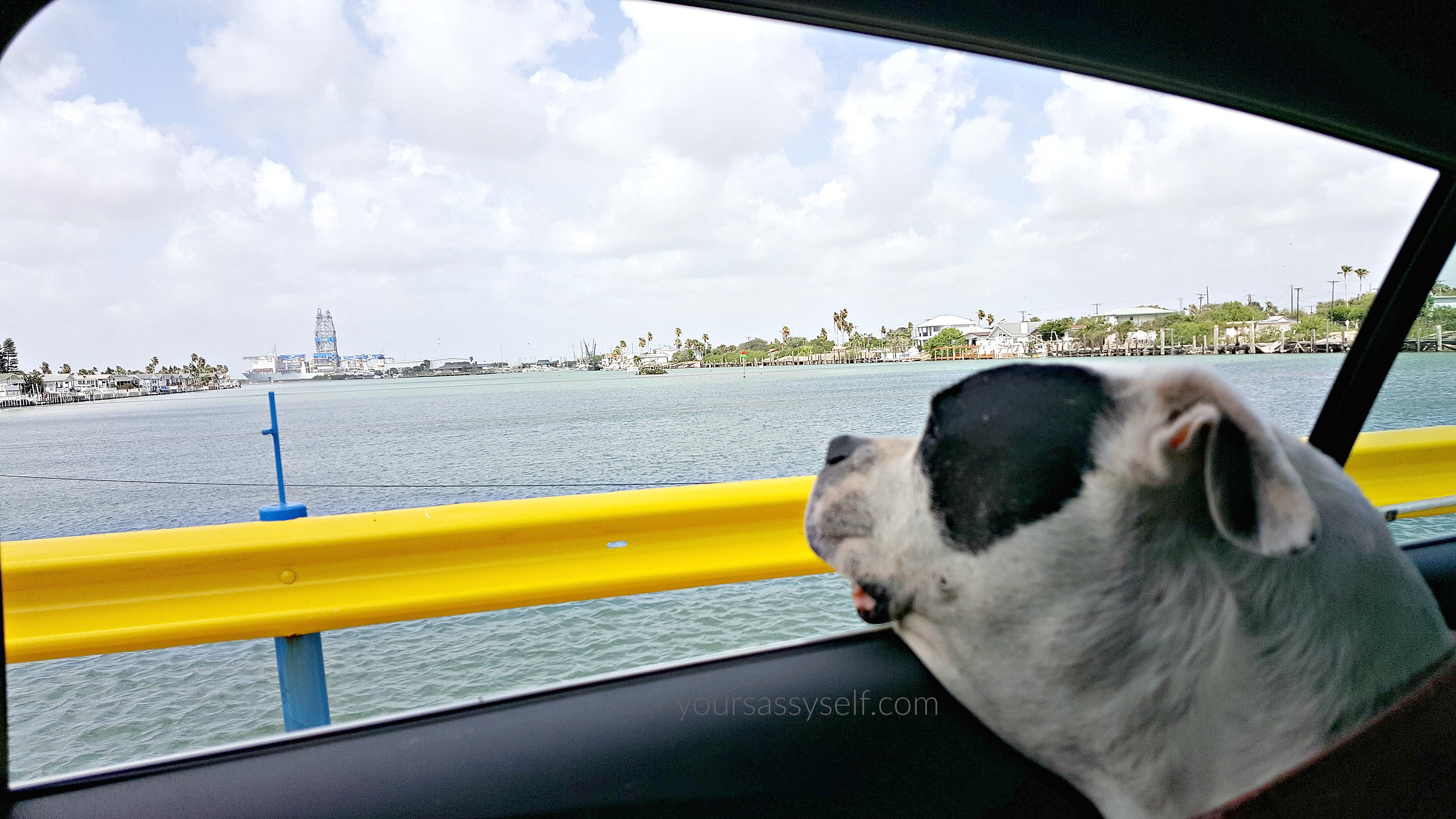 Dog Staring at Water from 2017 Chevy Cruze - yoursassyself.com