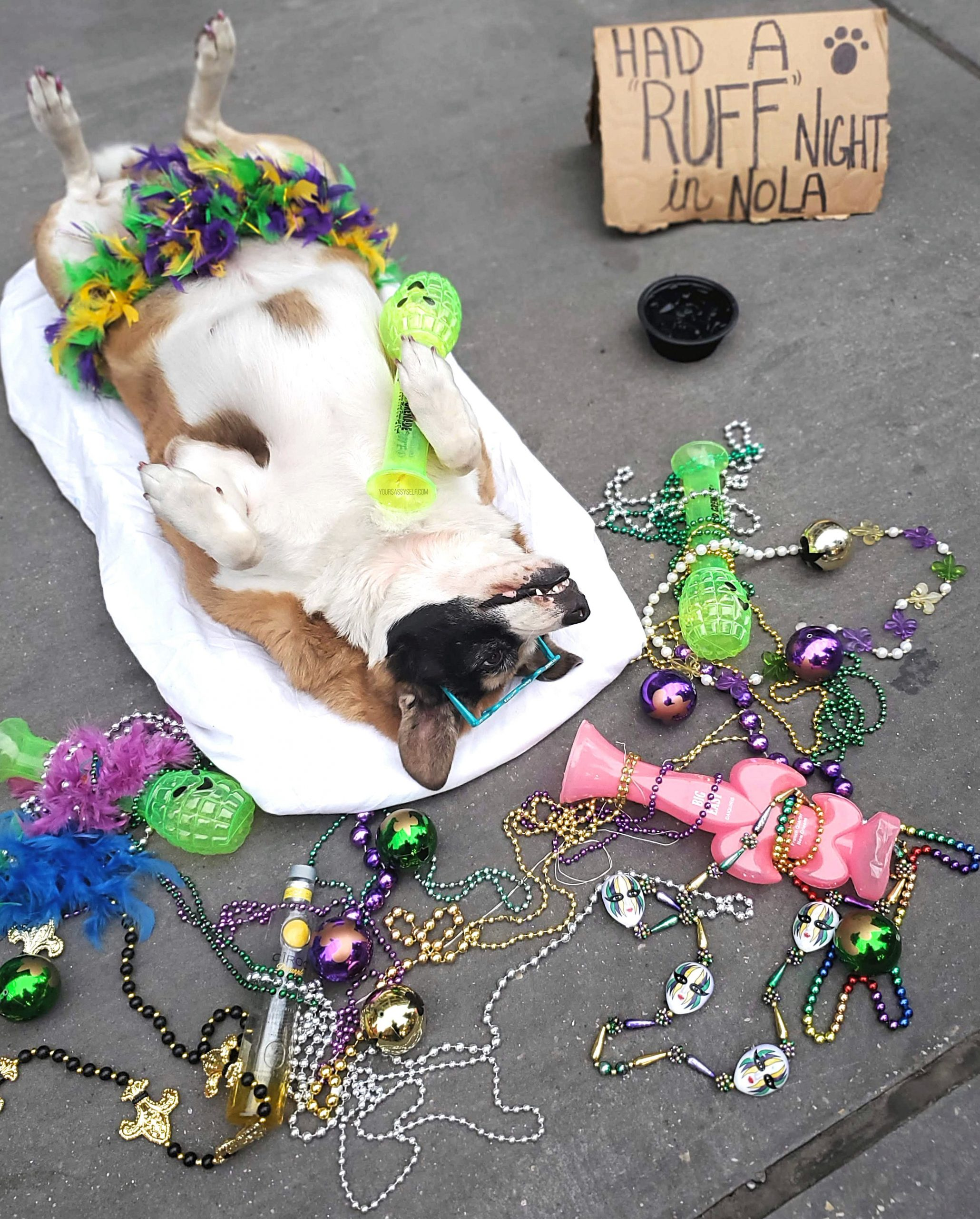 Dog laying on Street after a Ruff Night in NOLA - yoursassyself.com